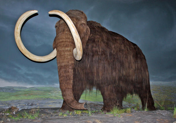 Wooly mammoth at Royal British Columbia Museum