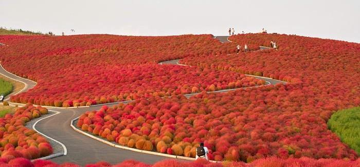 Hitachi-Seaside-Park-700x325