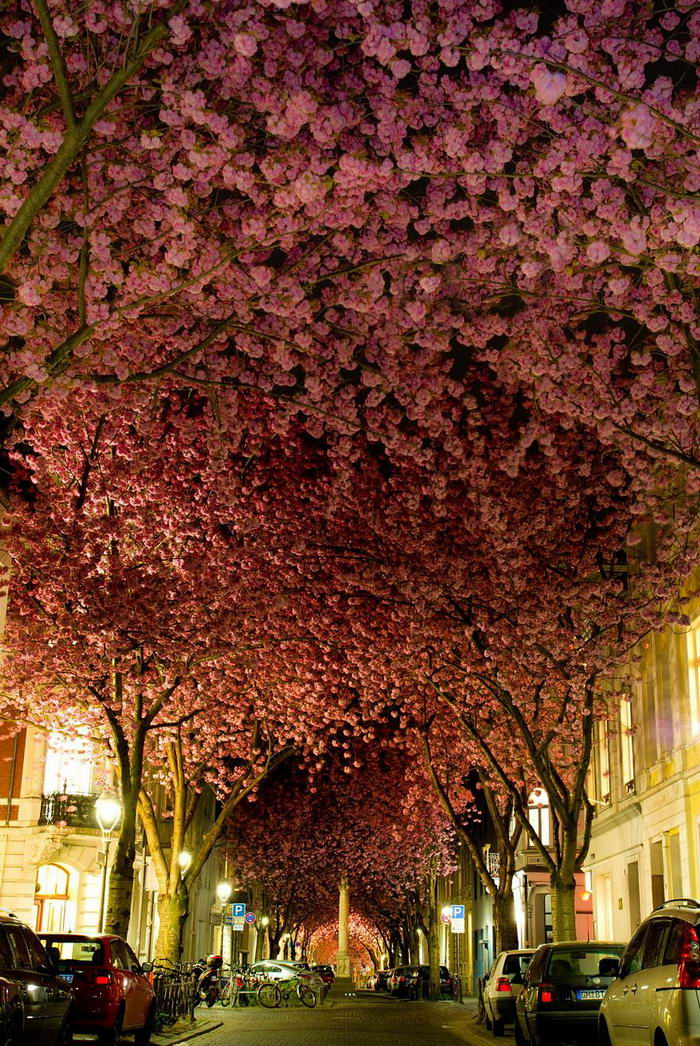 Unbelievable Places Street in Bonn